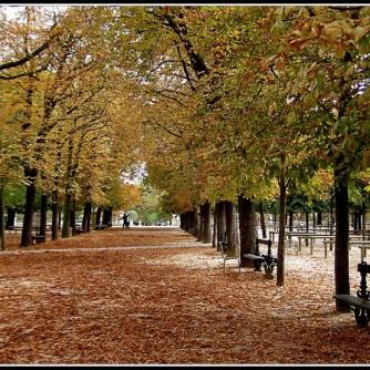 Automne - Jardins du Luxembourg